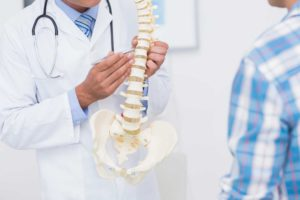 Doctor showing spine model